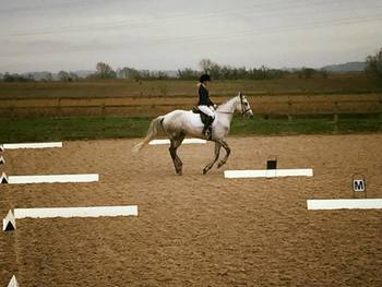 Experienced Rider Wanted for 15.2hh 10y.o Show-Jumper Mare