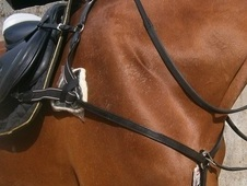 ONLY £28! Great Quality 5 Point Breastplate