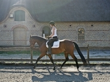 Experienced rider looking for dressage horse!