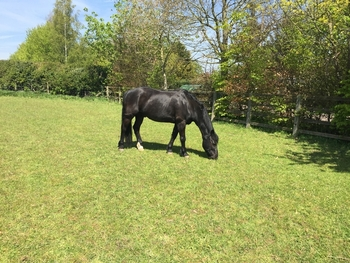 Sharer/Loaner required for two ponies