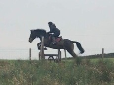 4 year old gelding for sale