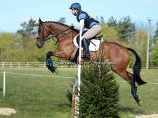Super Riding Club Allrounder/Competition Horse
