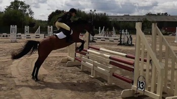 Super Pony Club/Riding Club Mare