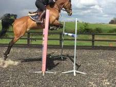 148CM showjumping superstar