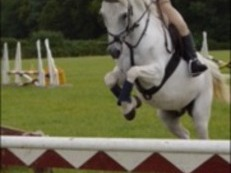 12.2hh competition pony for sale