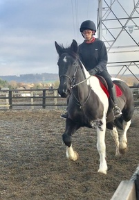 Full up 16.2hh coloured mare