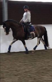 Horse for Full Loan