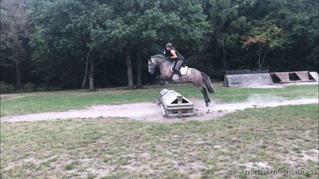Talented future eventing or dressage prospect