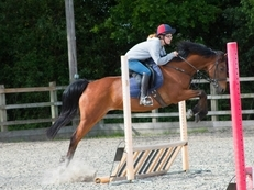 Sharer wanted for 14.2 Irish Sports Pony