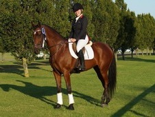 *******For sale ****** Millhill Bouquet(KIT), 16. 1 hh, 11-year-o...