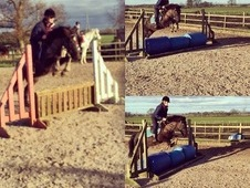 13hh, 12 year old, jumping pony gelding!