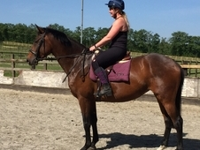 Homebred potential eventer