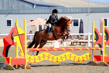 Super-Talented 14.2hh Young Showjumper/Pony Club Pony/Eventer