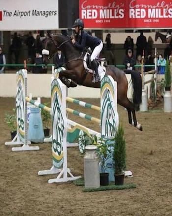 Top 5yr Old Showjumper for sale