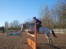 14. 3 Appaloosa all rounder (Taboo II)