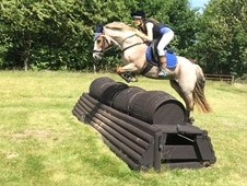 Striking 14hh Welsh Section C mare, rising 10yr old.