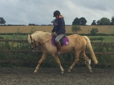 Palomino project mare