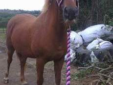 Mare for full loan/May sell to right home