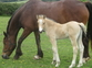 Young Stock and Foals for sale