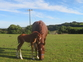 Young Stock and Foals for sale in United Kingdom