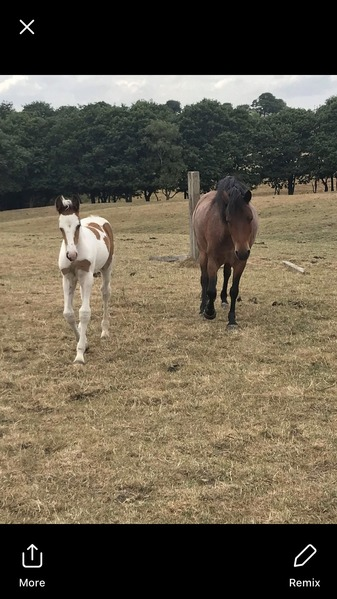 Stunning Foal for sale