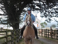 Pretty belgian registered haflinger with a lovely temperament and...