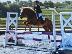 BRILLIANT PONY CLUB PONY
