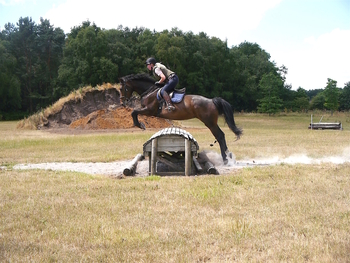 IDEAL POTENTIAL EVENT HORSE! QUALITY ALLROUNDER WHO LOVES TO JUMP!