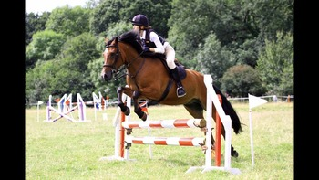 13.2hh 12 year old New Forest type gelding