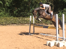 16.3hh been there done that type