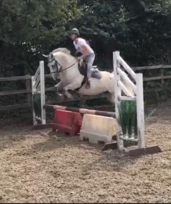 Ultimate allrounder Irish Gelding 14.2