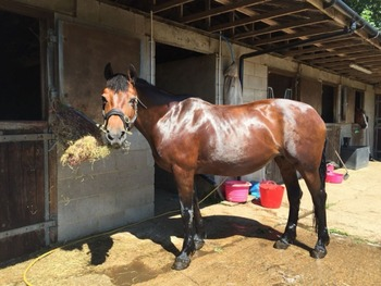 Sharer/s required for Beautiful Fun 15.1 Welsh Section D Mare