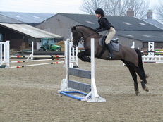 Talented 14.2hh all-rounder