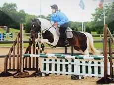 10 year old 14.2hh Mare - All Rounder