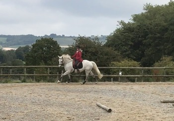 Lovely All-rounder - 9 year old 16.1 hh Connemara x