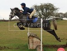 Amazing Eventer, WHP, All Rounder