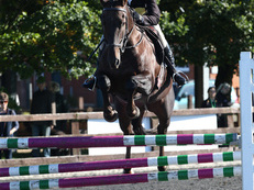 JUMP / COMPETITION HORSE