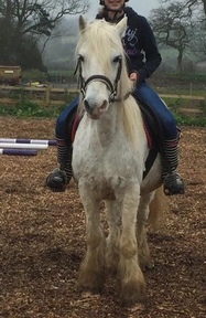 Bombproof mothers dream 13hh Pony