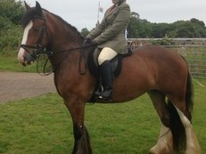Fantastic family horse for sale