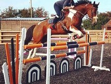 Quality All Rounder / Event horse