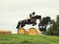EYE CATCHING SHOWJUMPING PONY FOR SALE!