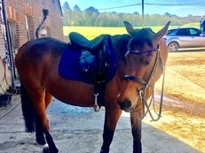 Horse for share / part loan