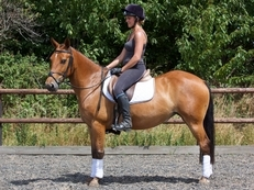 Very talented 14.2hh 6y/o Mare