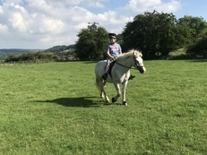 Full up 13.2hh connerama x grey gelding pony
