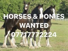 WANTED HORSES AND PONNIES