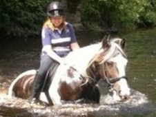 For Part Loan 15. 1hh Beautiful Cob Gelding!