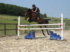 Potential top class showjumping pony
