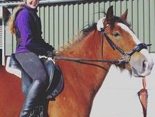 Gorgeous 15. 2hh Cob gelding for share
