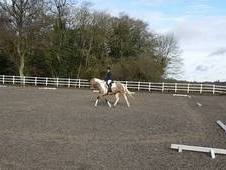 lovely 17hh 10yr old sports horse