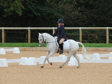 Full up 12hh registered section A grey gelding, 8yrs.